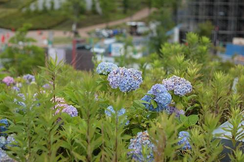 Flowers at Katsura Campus 1