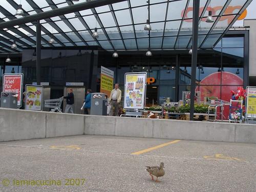 kein Entenfutter im Angebot