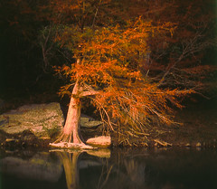 Last Light (AnEyeForTexas) Tags: sunset fall river landscapes texas fallcolor fallcolors cypress 20 hillcountry swimminghole guadaluperiver texasstatepark centraltexas naturesfinest swimmingholes stateoftexas top20texas bestoftexas