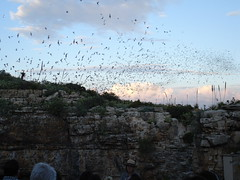 Carlsbad Caverns Bat Flight