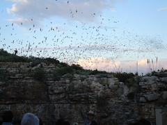 Carlsbad Caverns Bat Flight