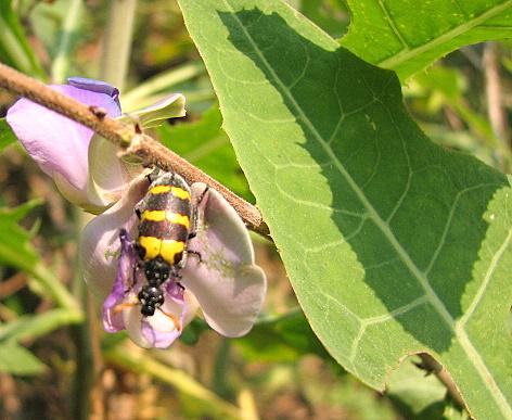 un id beautiful bug