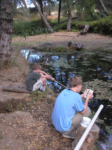 Pond Study 1