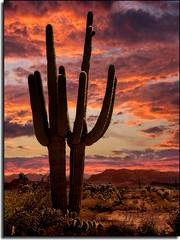 Saguaro Sunset (MikeJonesPhoto) Tags: sunset arizona cactus nature landscape bravo photographer desert searchthebest scenic professional saguaro burningup wonderworld magicdonkey 112degrees mywinners holyshititshot worldbest anawesomeshot mikejonesphoto impressedbeauty superbmasterpiece goldenphotographer flickrdiamond frhwofavs theperfectphotographer imfeelinhothothot dontgotophoenixinaugust immeltingimmelting 112degreebutwithwindchillfactorfeelslike104 fuckyouflickryoufuckingsuck