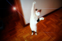 The Dancing Kitty