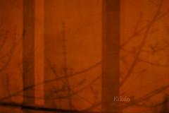 Shade of lights/ Sombra de luces (eikn) Tags: macros agujas panozo