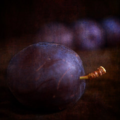 Ripe (borealnz) Tags: texture fruit square bravo purple plums bsquare magicdonkey completeherbal artlibre anawesomeshot infinestyle lightstylus thankskevsydjudywilkoandreaandsunsetsailor borealnz