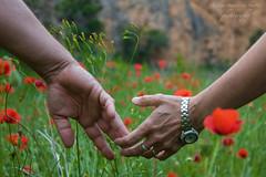 Por una vida junto a ti (cee.eec) Tags: flowers espaa flores verde green love thanks canon gracias amor manos ring padres reloj campo lover 450 anillo ellos amapolas handas