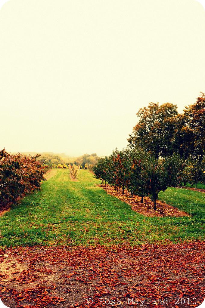 Fall Walk 1.2 bis