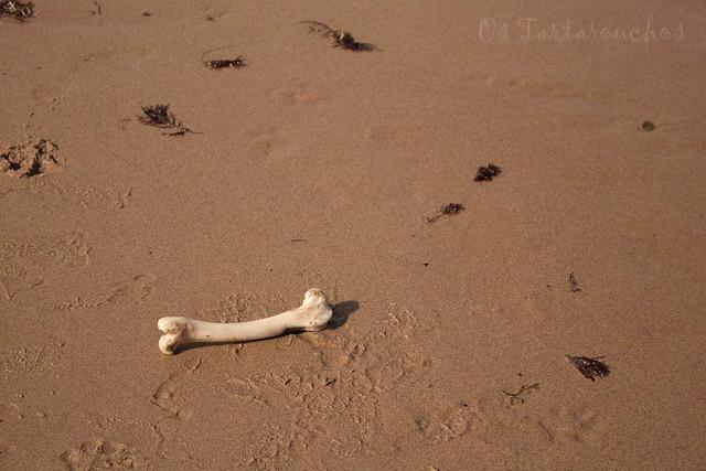 un óso