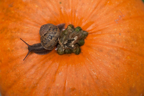 Snail and pumpkin
