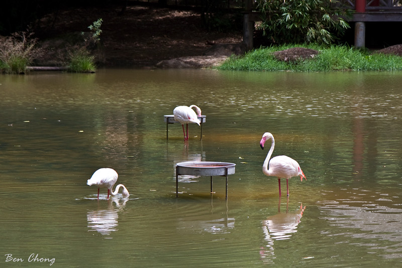 Wetland, Putrajaya
