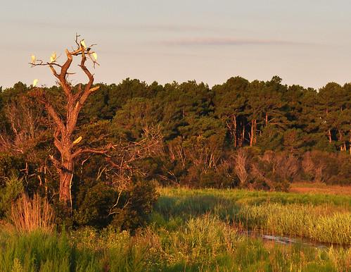 Egret Trees (2)