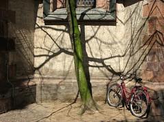 urban nature - by goandgo