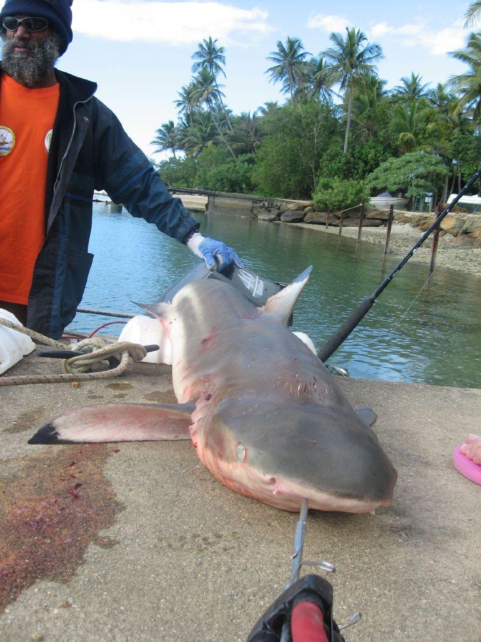 La pêche dans les alentours volgograda en août