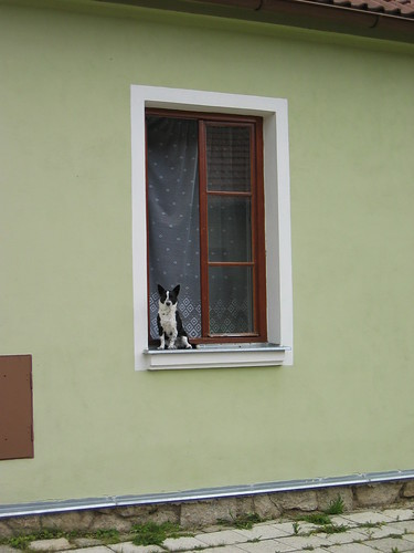 How much for that doggy in the window?