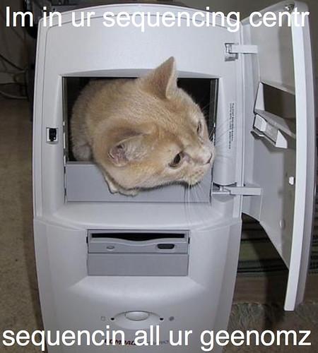 cat-in-computer_2