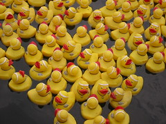 Ducks Up Close at BBBS Event - by terren in Virginia