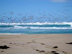Johanna Beach (kenorrha) Tags: australia greatoceanwalk scenicsnotjustlandscapes