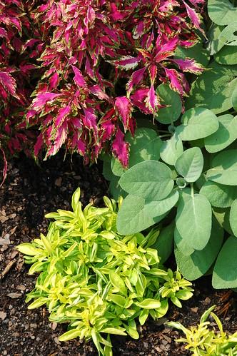 Detail, Quilt Garden Plants