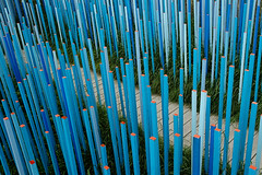 Grow (DJ Axis) Tags: wood blue orange forest garden sticks jardin multiplicity pole bleu sidewalk ville fort multitude picket trottoir bout piquette btons