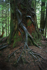Rooted Thews - by backpackphotography