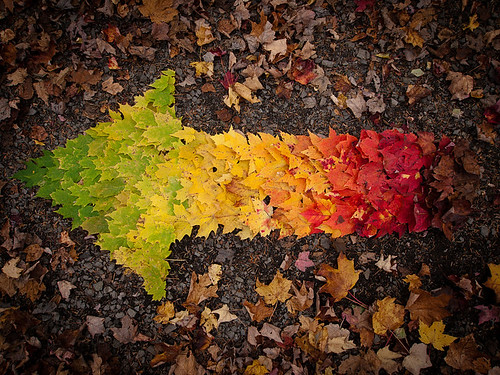 Colorful Arrow Made From Fall Leaves