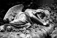 Sleeping Angel (fuerst) Tags: uk greatbritain travel sleeping england blackandwhite bw sculpture friedhof london grave graveyard statue angel tomb skulptur sw engel grab schlafen reise highgatecemetery schwarzweis grosbritannien canoneos1000d