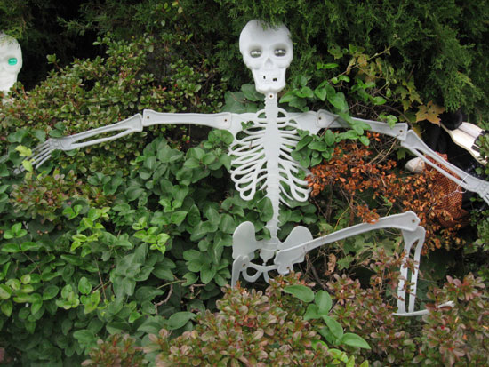Skeleton in the Bushes