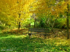 S' asseoir sur un banc (Domi Rolland ) Tags: france nature automne canon europe banc millau aveyron midipyrénées graufesenque