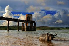 rural_scenes1 (Edwin_Martinez) Tags: lake river landscape philippines filipino laguna dpp pinoy pagsanjan tpc cavinti ruralscenes fpc canon30d pipho edwinmartinez hcpphotogs 1on1animalsnonpetsphotooftheday 1on1animalsnonpetsphotoofthedayjune2007