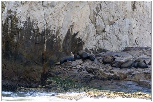 Riu Palace Cabo Sea of Cortez Seals