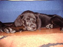 Ender sleeping
