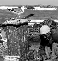 waiting for a fish (Monia Sbreni) Tags: africa bw fisherman gull morocco maroc marocco marruecos coolest essaouira marokko biancoenero moroccan marrocos moniasbreni