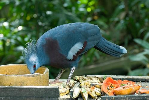 Red Eye Bird