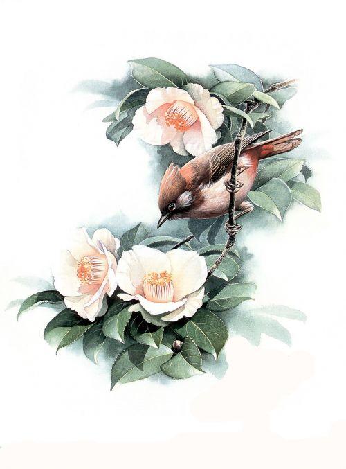 1475190124 4c2da71e91 o - cute bird paintings