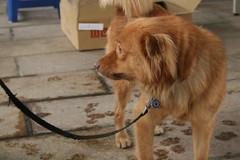 透過宣導,幫助民眾休憩時不受野地犬干擾。