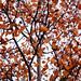 Bailey Autumn Leaves