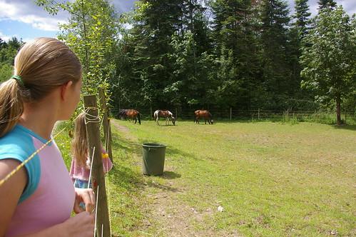 alesia horses