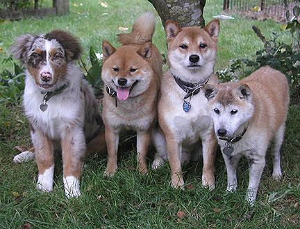 my-dogs.jpg