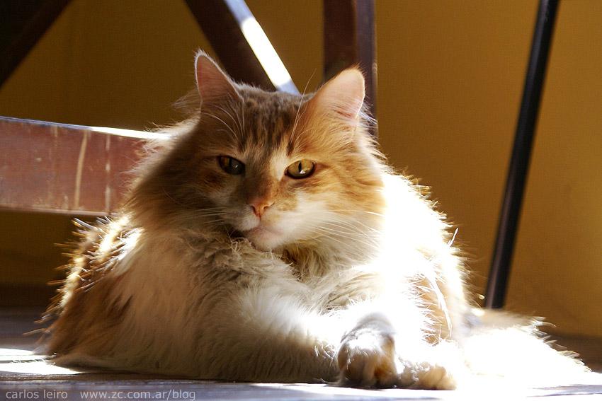 Theo , el gato con ojotas 1227123666_4e1ca13829_o