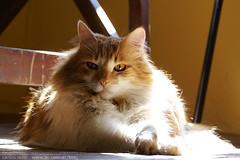 Im-so-tired (carloszolrak) Tags: pet cats pets cat kitty gatos gato tired kitties theo mywinners anawesomeshot impressedbeauty