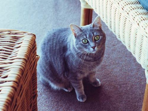 D-kitty by Wicker Furniture