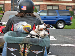 Dog on a Hog (magarell) Tags: dog nj martinsville somersetcounty mortorcycle