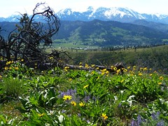 flowers/mountains