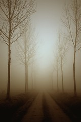 tra i campi nella nebbia (mat56.) Tags: light nature misty fog alberi landscape natura campagna nebbia paesaggi lombardia lodi pioppi pianura lodigiano padana mat56 turanolodigiano elitegalleryaoi mygearandmepremium mygearandmebronze mygearandmesilver mygearandmegold mygearandmeplatinum mygearandmediamond