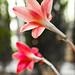 35mm floral
