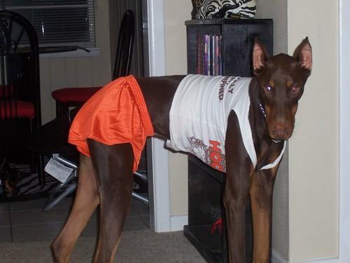 hootersdog