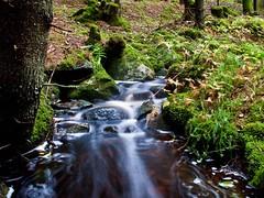 Swirl (dubbelt_halvslag) Tags: longexposure green nature wet water weather creek canon landscape woods rocks long exposure raw forrest sweden schweden natur north explore swirl sverige scandinavia vatten vstkusten strmstad g10 explored nsinge lngexponeringstid nsingesen