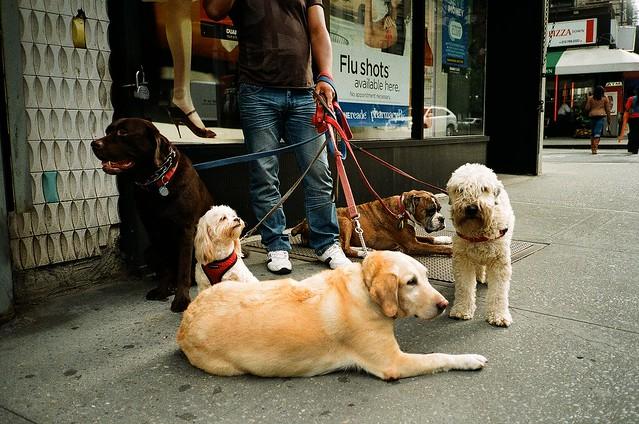Dog diversity